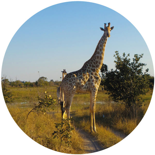 Explore-Botswana-Combi-Namibia-Itineraries-photo-02