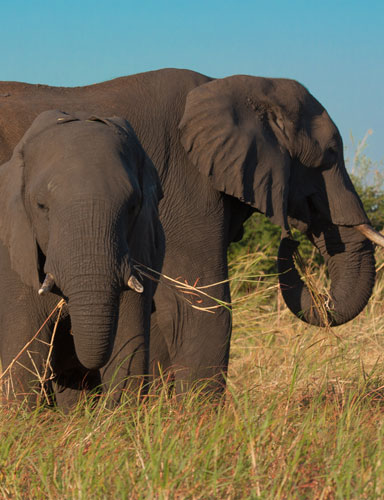 Explore-Botswana-Sustainable_conscious-travelling-photo01